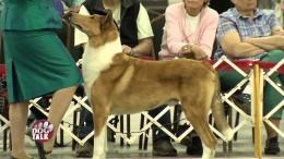 Dog Talk Episode 612