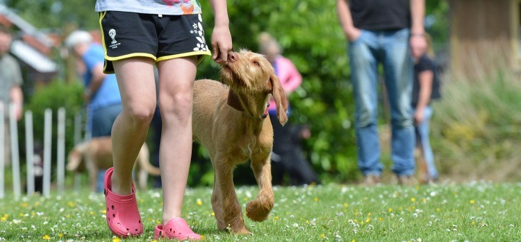 The Importance of Consisitency in Dog Training
