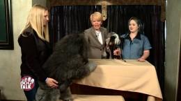 Dog Talk Episode 613