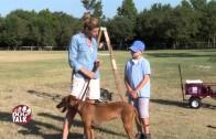 Dog Talk 631