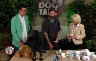 Dog Talk 715