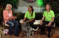 Dog Talk 730