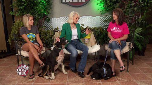 Dog Talk 734