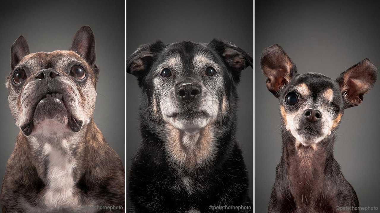 older dogs