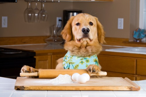 recipefortheperfectpup