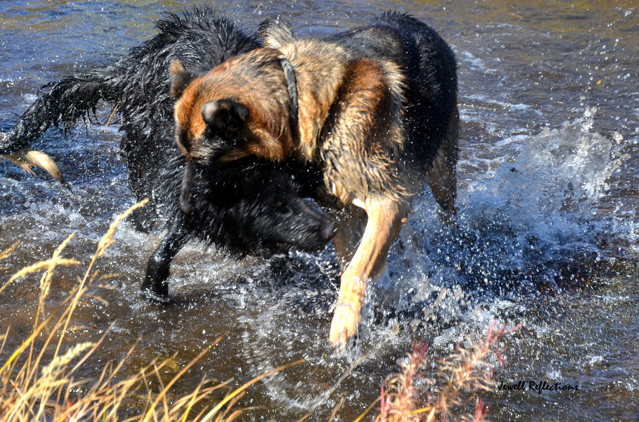 The Nature of Dog Learning