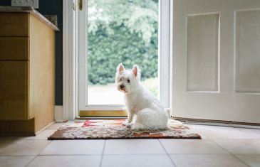 Desensitizing your dog to people at the door