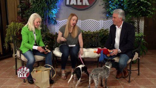 Dog Talk 815