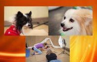 Dog Talk 819