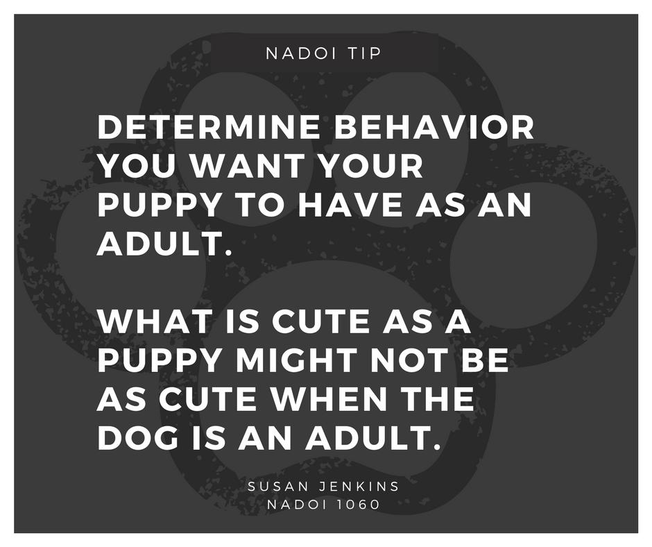 Puppy Behavior