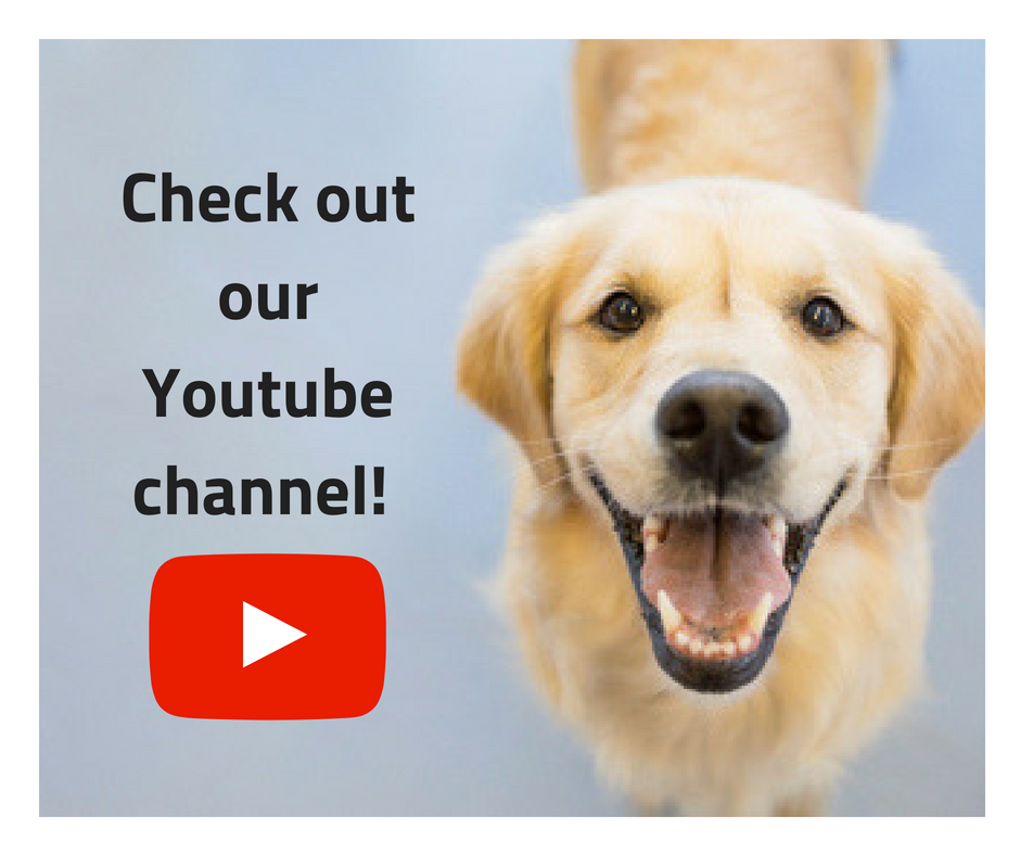Dog Talk TV on Youtube
