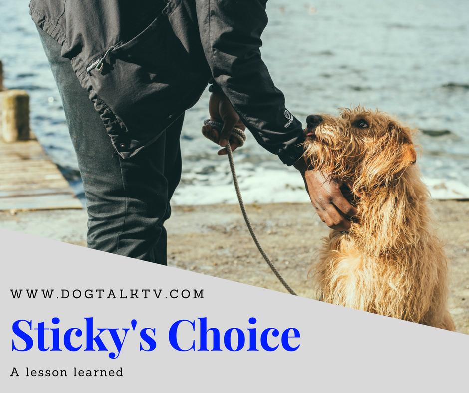 Sticky's Choice