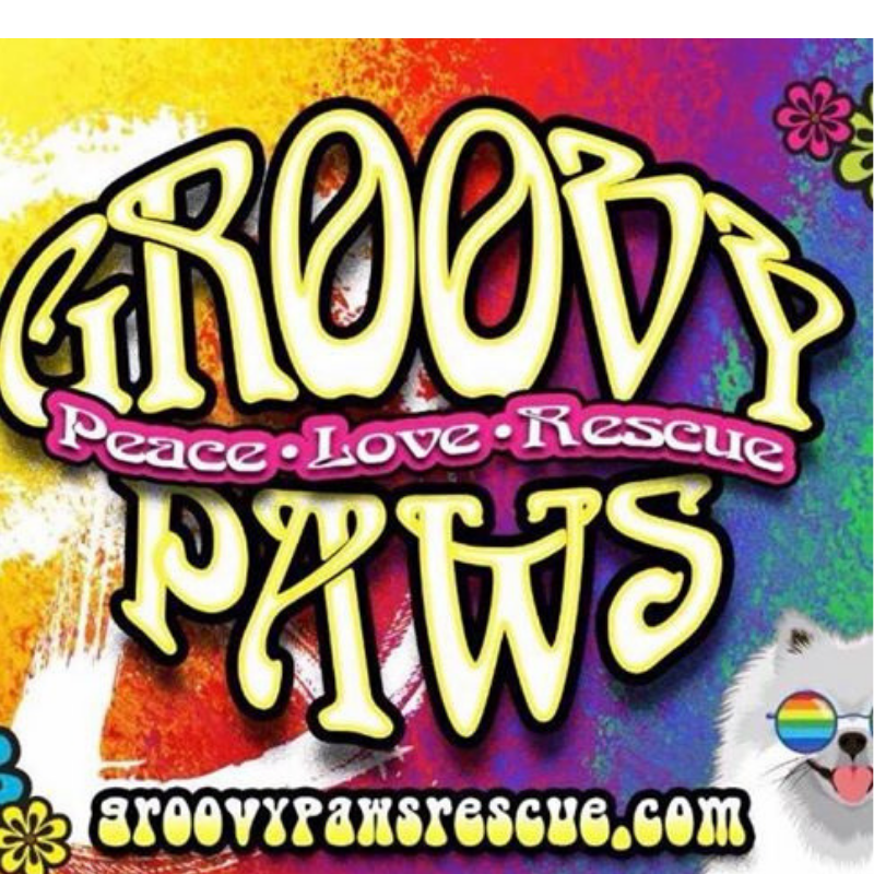Rescue Feature: Groovy Paws