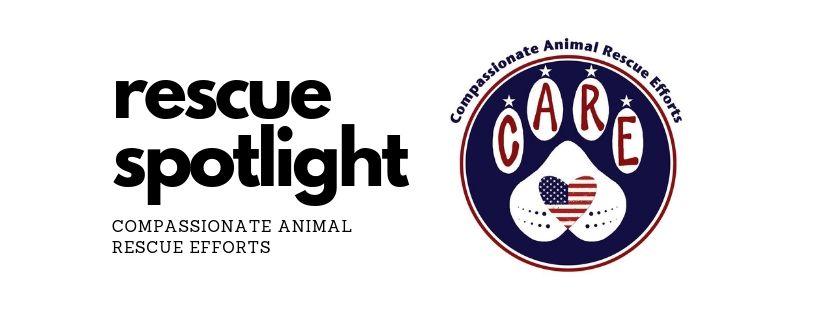 Rescue Spotlight: CARE – Compassionate Animal Rescue Efforts